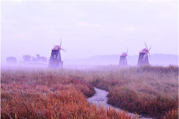 Picture Of Fog Field Windmills